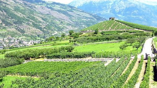 Doc Valle d'Aosta