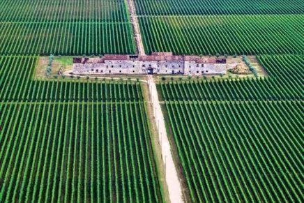 """Le Famiglie dell'Amarone d'Arte conquistano il premio """"Wine Awards for Friends"""" della rivista Feinschmecker"""