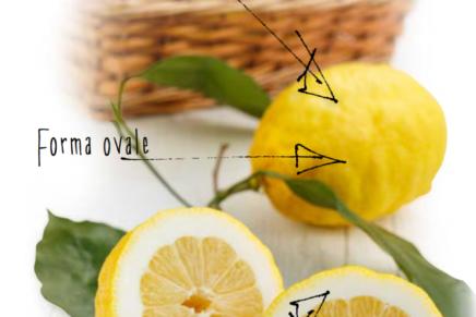 Il comune limone diventa super a Sorrento